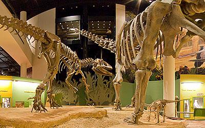 Museum Highlights Virtual Tour