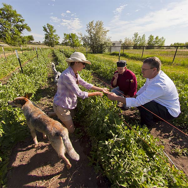 Escoffier Farm to Table® Experience